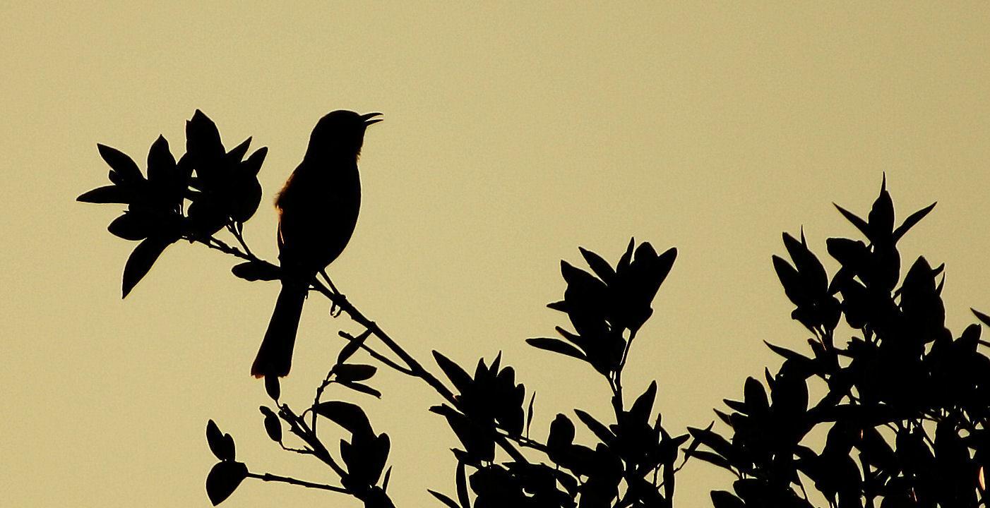 to kill a mockingbird summary chapter 1 to 11